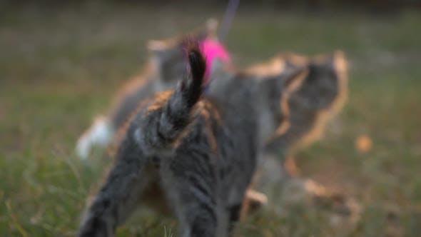Nette Kätzchen spielen im Garten