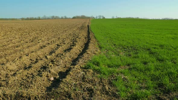 Thumbnail for Plowed and Green Field