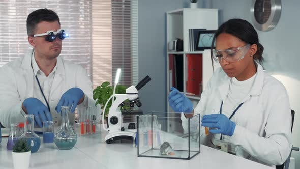 Thumbnail for Black Female Research Scientist Making Experiment with Hamster in Modern Chemistry Laboratory