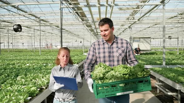 Thumbnail for Farmers in Greenhouse with Modern Technology for Growing Vegetables