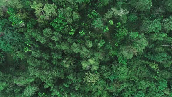 Aerial Shot of a Tropical Rain Forest. Top View of Green Trees From Drone. Aerial Drone View of
