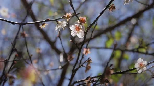 Thumbnail for Blume im Frühling