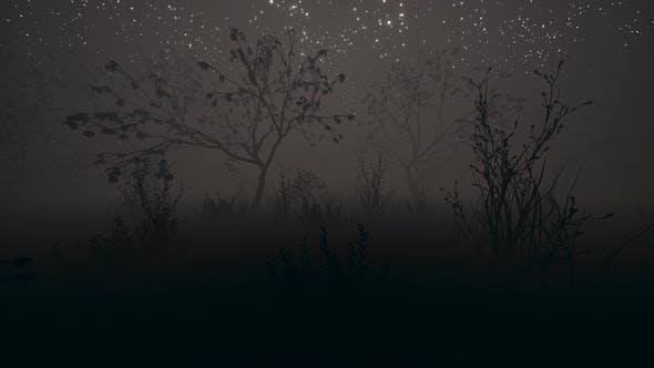 Thumbnail for Dark Night Garden Fog 4k