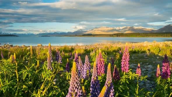 Thumbnail for Evening on Tekapo Lake
