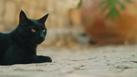 Thumbnail for Black yellow-eyed cat lying down and relaxing on pavement, slow motion 4K