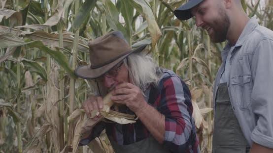 Thumbnail for Cheerful Farmer Demonstrating Ripe Corn To Grandson