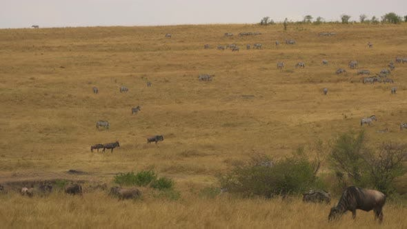 Thumbnail for Wild animals on the plains of Masai Mara