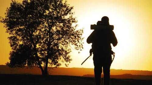 Silhouette Hiker with Backpack Walking Against the Background of a Large Tree at Sunset