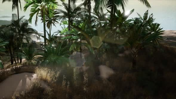 Thumbnail for Aerial View of Palms on Sand Dunes Near the Sea