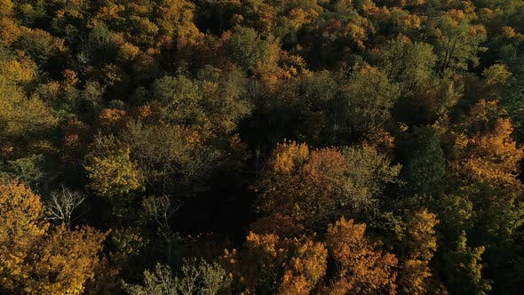 Cover Image for Drone Flying Over Forest Tree Canopy Of Autumn Colors In Fall Season