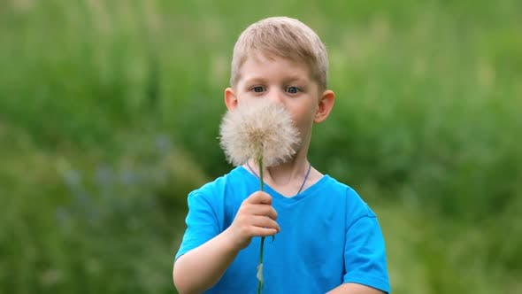 A small boy blows on a large dandelion flower while playing in a clearing on a summer day.