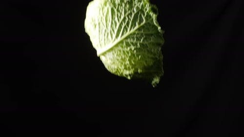 Green Beijing Cabbage. Tossing. Alpha Channel
