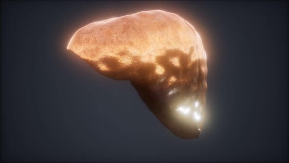 Thumbnail for Loop 3d Rendered Medically Accurate Animation of the Human Liver