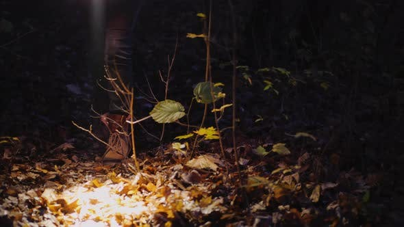 Thumbnail for Legs of a Woman in Boots Walking Along a Forest Trail, Lit By the Light of a Flashlight