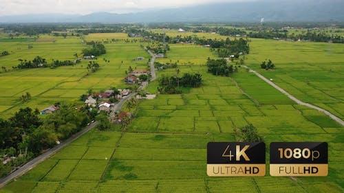 AH - Top View Rice Fields 04