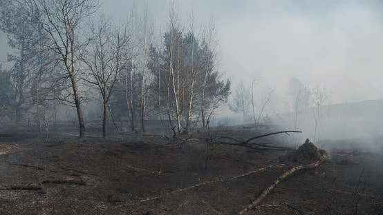 Heavy Smoke Forest Fire Ukraine In Spring
