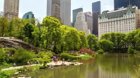 Pond in Central Park