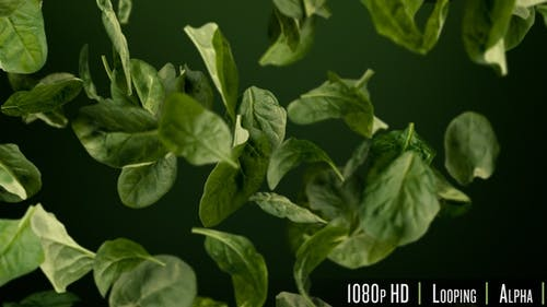 Fresh Healthy Green Spinach Leaves Tumbling Looping Background