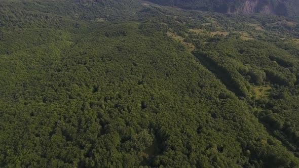 Flying Above Vast Green Forest