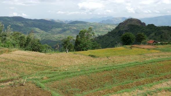 Tilt from a rice terrace in Central Province, Sri lanka