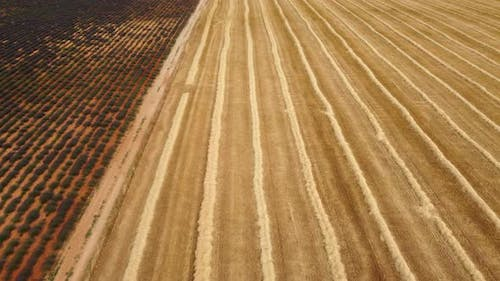 Harvested Wheat Field Agriculture Aerial