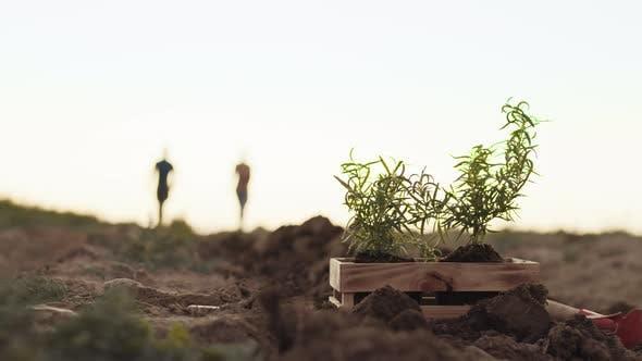 Thumbnail for Schachtel mit Pflanzen auf dem Feld