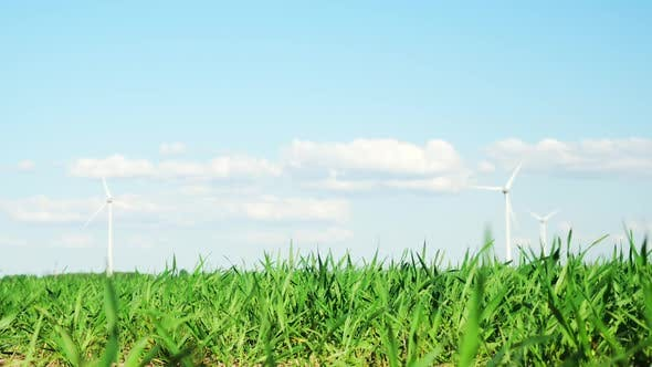 Thumbnail for Wind turbines and green plants