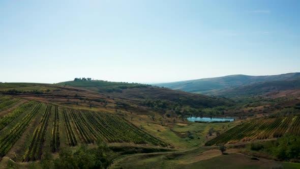 Cover Image for Aerial Shot of Beautiful Rural Vineyard