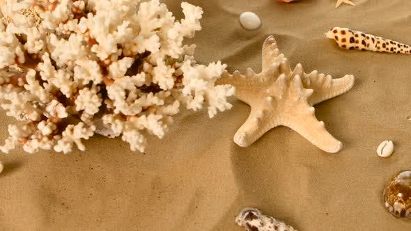 Thumbnail for Beautiful Shells and Coral on Sand Against, Rotation, Closeup