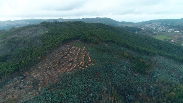 Cover Image for Forest and Deforestation