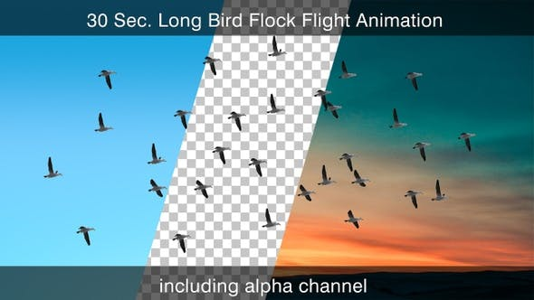 Cover Image for Bird Flock With Alpha Channel