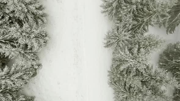 Thumbnail for Forêt d'hiver à travers les nuages