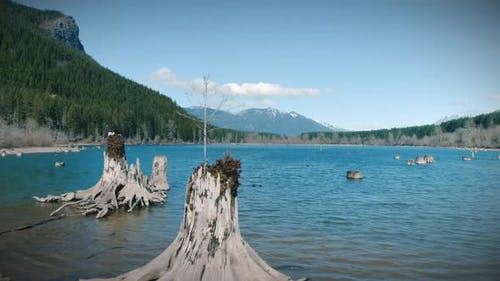 Abstract Nature Dolly Of Mountain Lake Tree Stumps