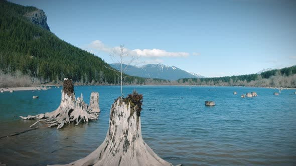 Thumbnail for Abstract Nature Dolly Of Mountain Lake Tree Stumps