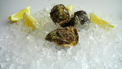 Falling oysters on the ice. Slow motion.