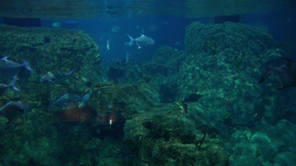 Thumbnail for Aquarium 10