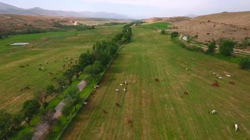 Many Horses Grazing At Farm