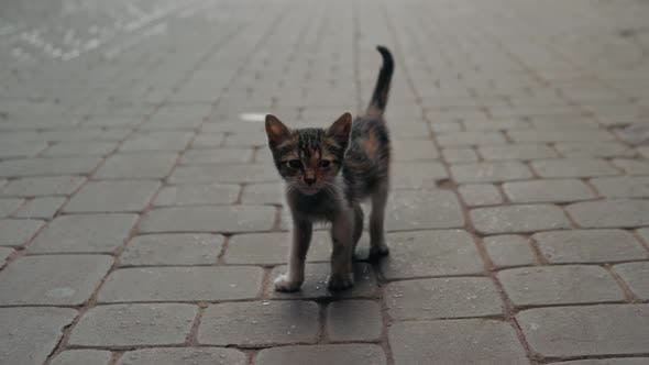 Thumbnail for Lonely Small Kitten Cat. Lonely Small Gray Kitten Sitting on the Street and Looking Somewhere Far