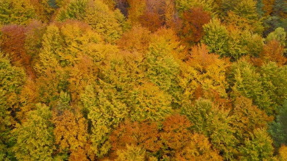 View From the Height on a Bright Yellow Autumn Forest