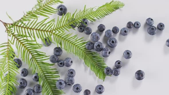 Thumbnail for Fresh Blueberries On White Background