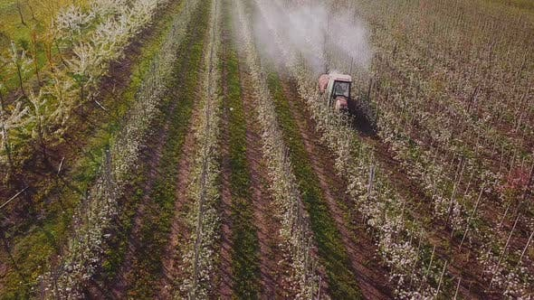 Cover Image for Tractor Spraying Flowering Apple Trees