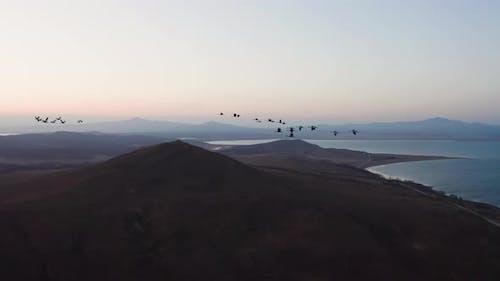 Luftaufnahmen einer Herde von Weißen Kräne bei Sonnenuntergang