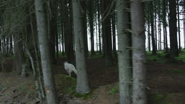 Thumbnail for Grausame Wolf läuft in den Wald