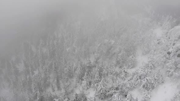 Aerial View of a Snowy Winter Forest During a Snowfall Coniferous Mountain Forests