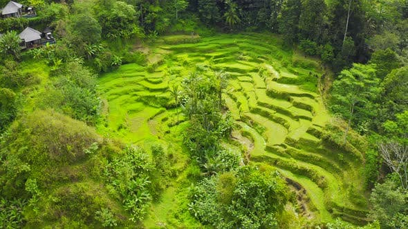 Aerial View Rice Terraces in Bali Indonesia