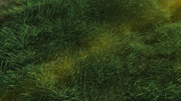 Thumbnail for Grass 4K