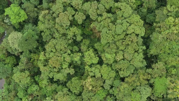 Aerial view of a tropical rainforest showing a very large variety of different trees