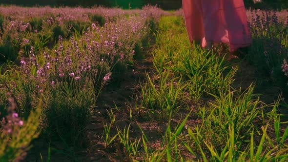 Thumbnail for Details Woman Legs on the Field with Lavender