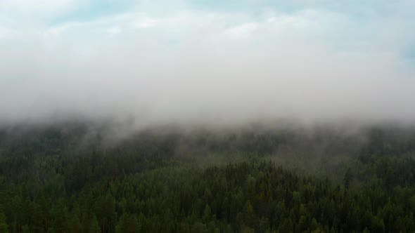 Thumbnail for Panoramic View of Lush Green Forest with an Area Covered By Thick Fog