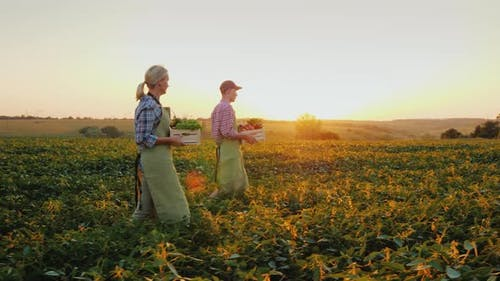 A Pair of Young Farmers Carry Boxes of Vegetables in the Field